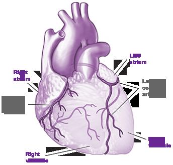 Coronary Artery Disease Test Lexiscan Pharmacologic Option